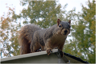 Why should you rely on a wildlife removal service?